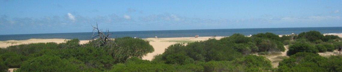 Chihuahua Beach